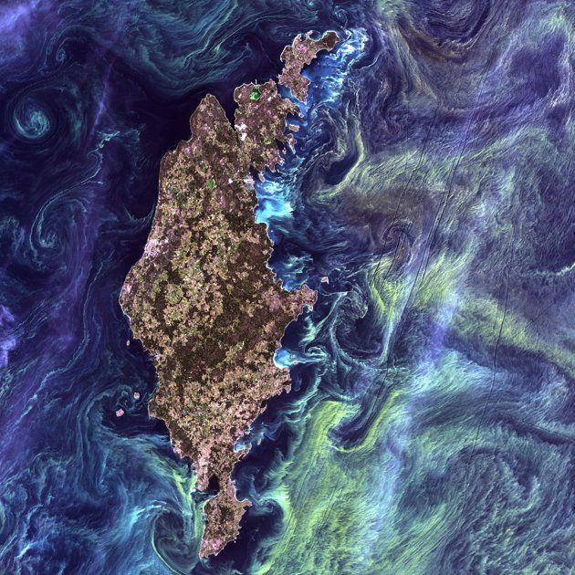 Landsat. Actual photo from space of greenish phytoplankton swirl in the dark water around Gotland, a Swedish island in the Baltic Sea.