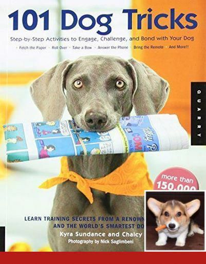Potty Training Kit For Dogs Dogtraining And Clickertraining
