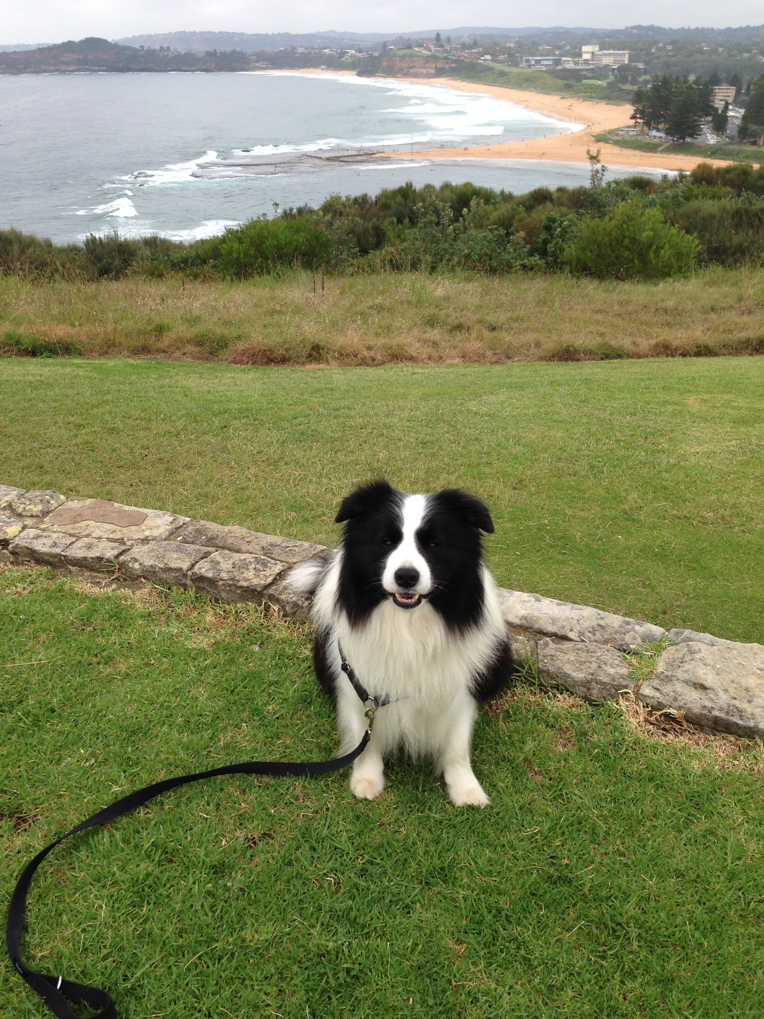 Pin By Soosyn On Border Collies Border Collie Best Dogs Collie