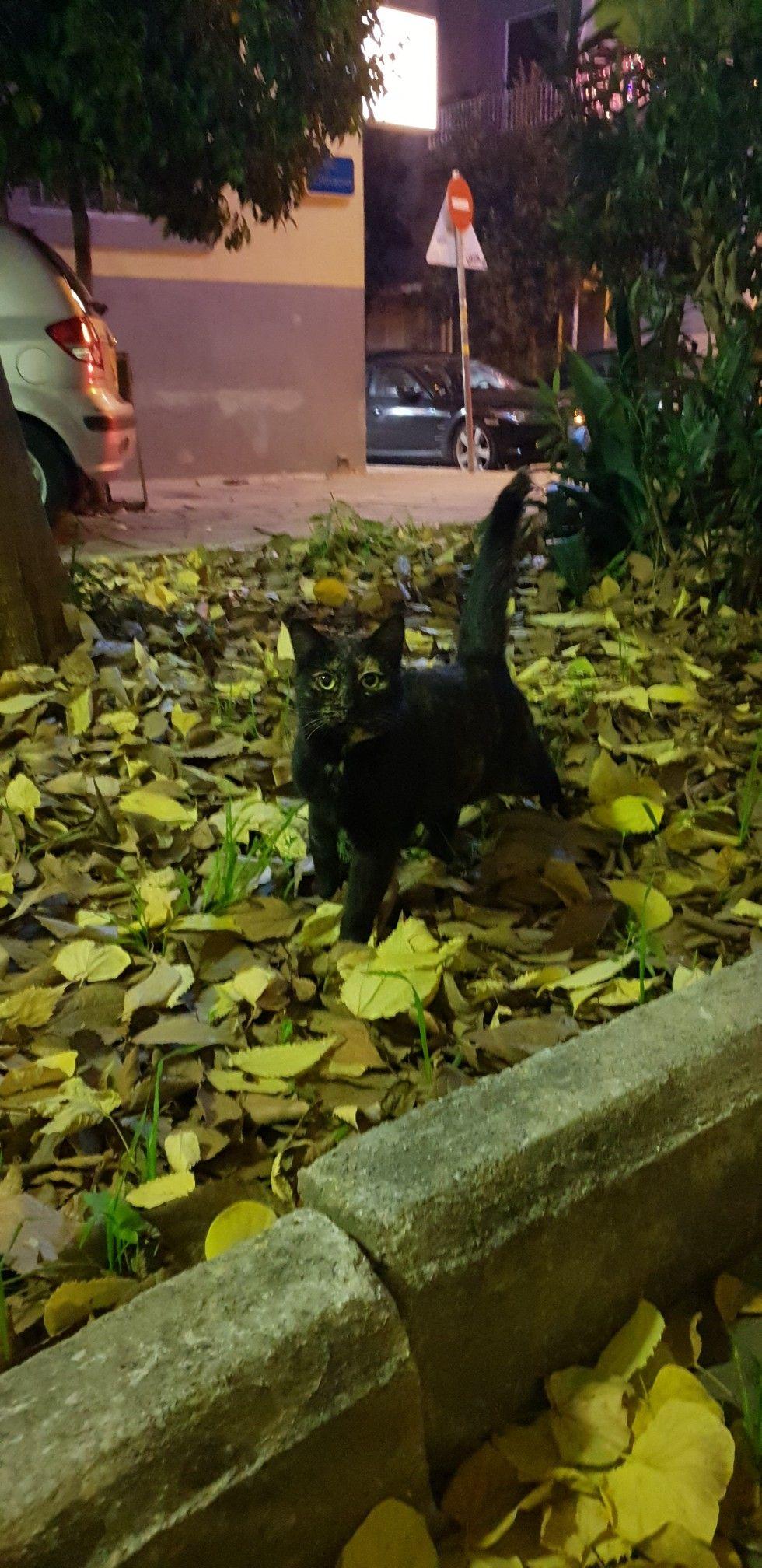 Pin By Sanja Rasovic On Cats Of Greece In 2020 Aquarium Kitty