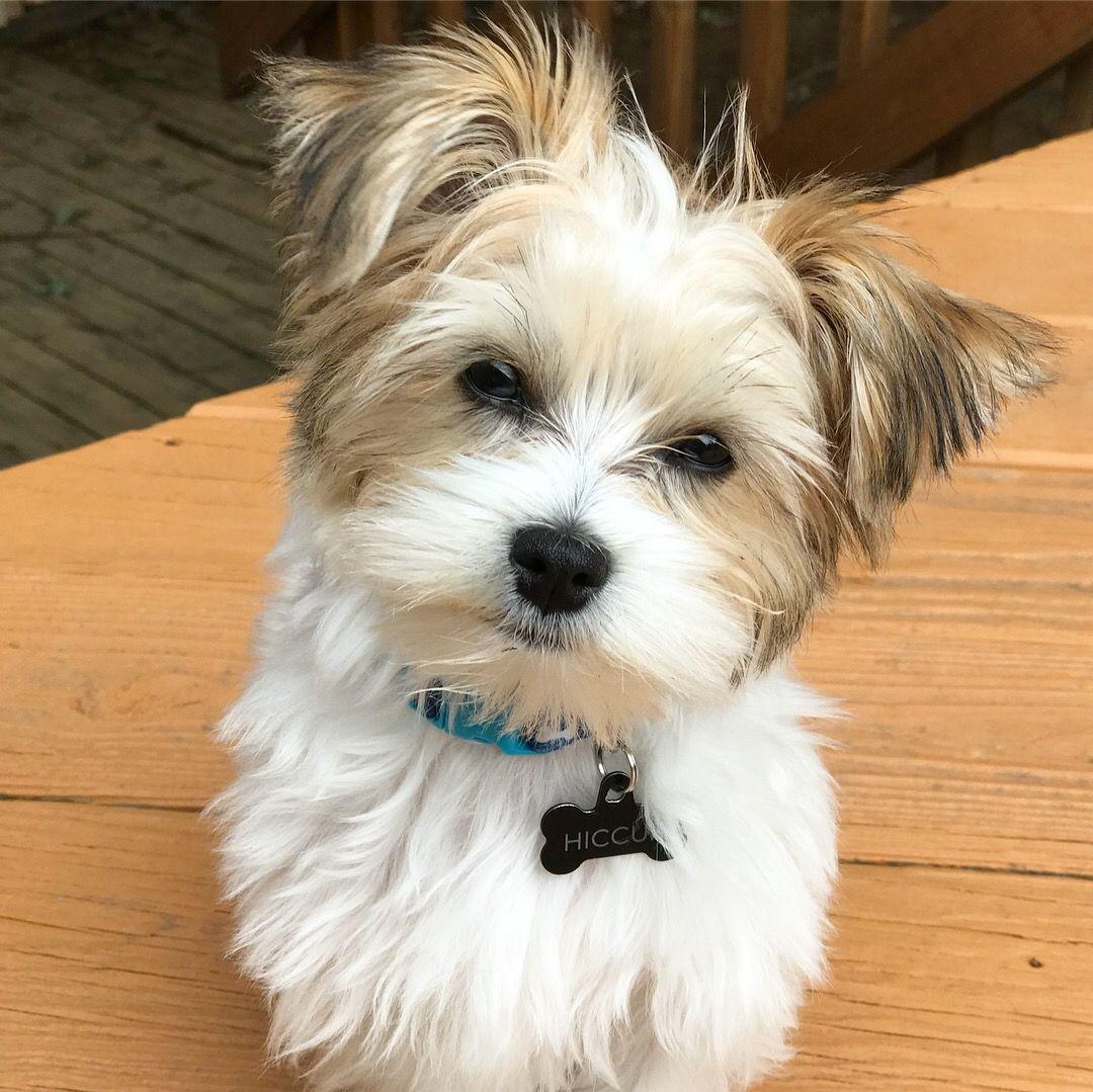 Puppies For Sale In Mcallen Tx Area Ideas