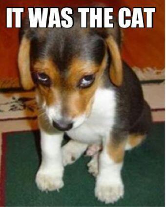 the cat did it ...@Kristen Sieh