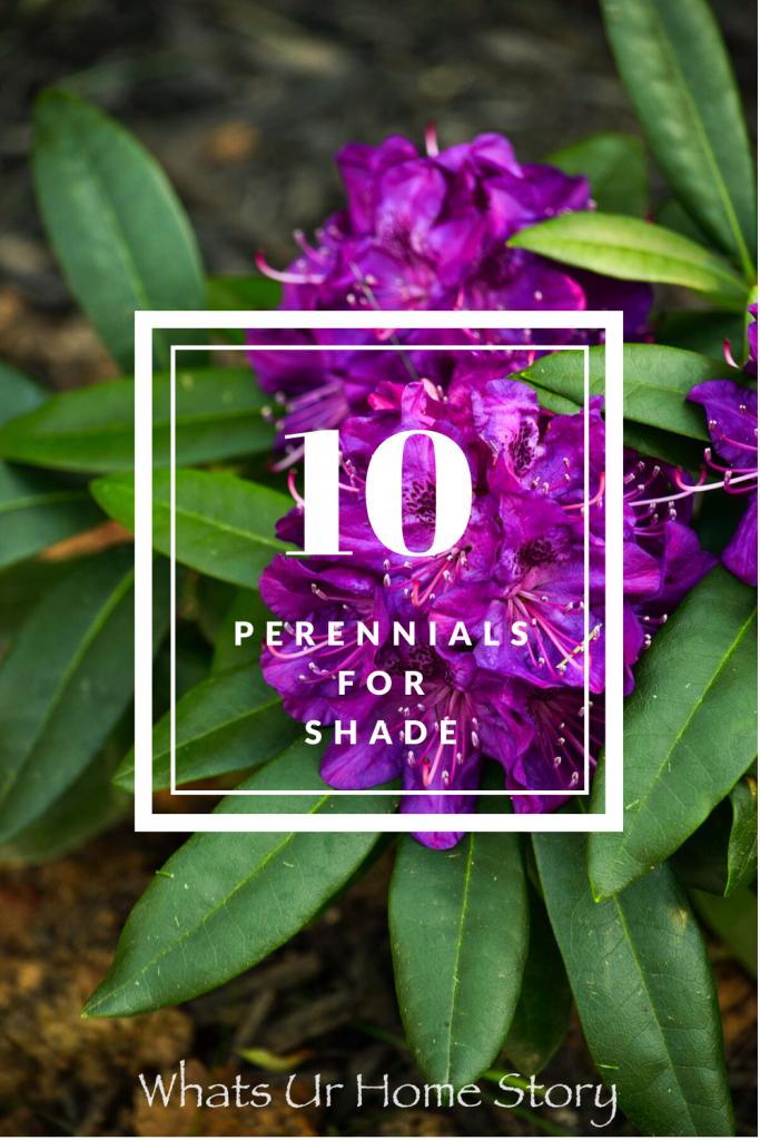 10 Best Perennials For Shade Best Perennials Best Perennials