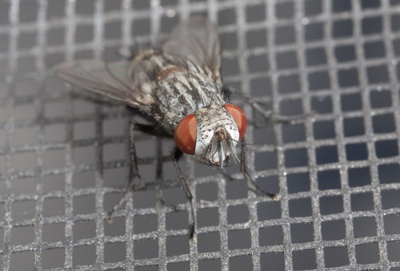 Top 10 Best Fly Killers Of 2017 Reviews Http Www Savantmag Com Best Fly Killers Reviews Bugs Keep Bugs Away Cleaning Screens
