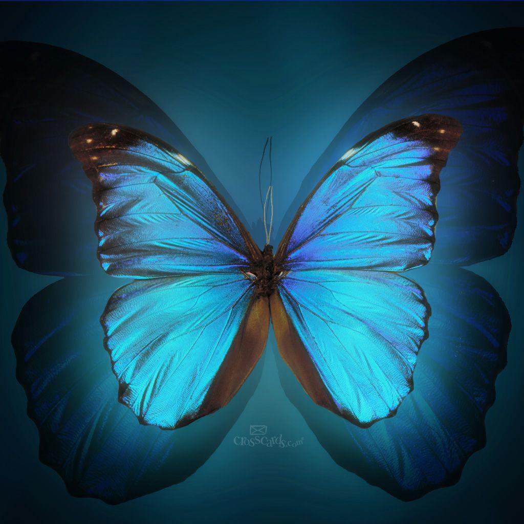 Mariposas Fondos De Pantalla, Papel Pintado De