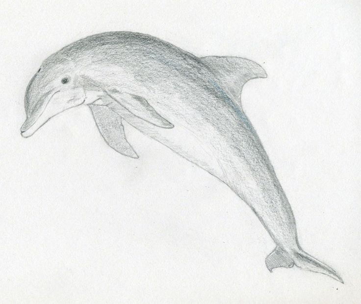 Simple Pencil Sketches Of Animals