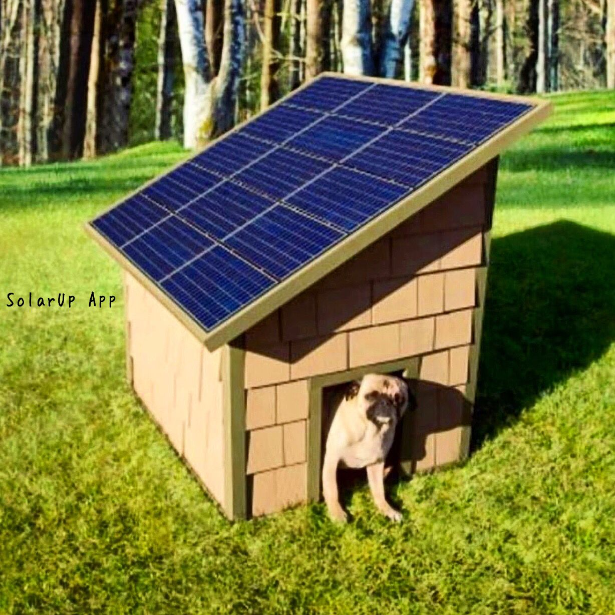 Don T Put Solar Power In The Dog House Dog House Heater Solar Panels Dog House