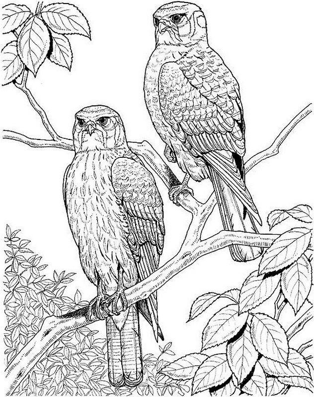 ausmalbild Zwei Raptoren auf einem Zweig | Ausmalbilder | Pinterest ...