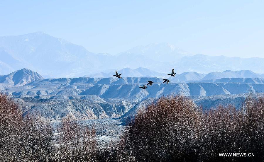 Beautiful Winter Scenery of Yellow River
