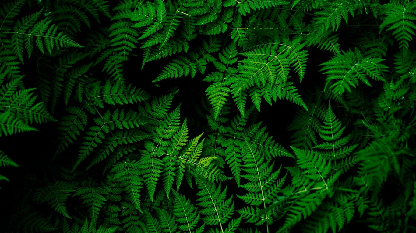 1366x768 Wallpaper Leaves Plant Green Green Nature Wallpaper Green Leaf Wallpaper Green Nature