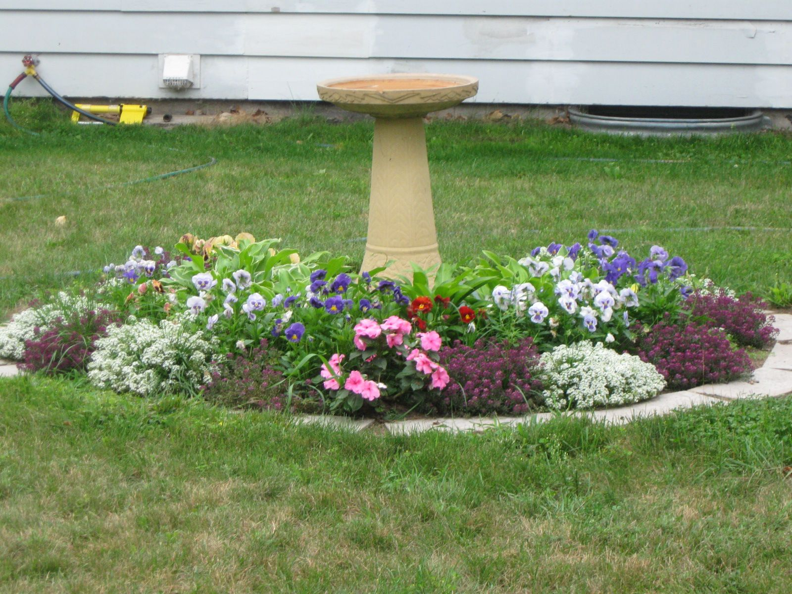 flowers growing around our septic tank cover the bird bath sits on top of the