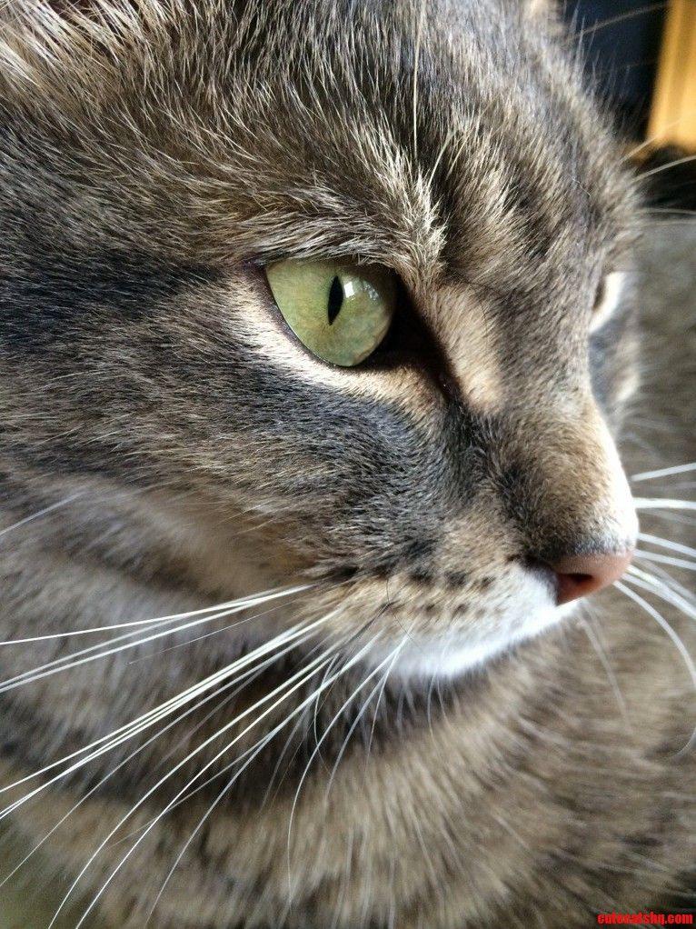 His name….Avon barksdale - http://cutecatshq.com/cats/his-name-avon-barksdale/