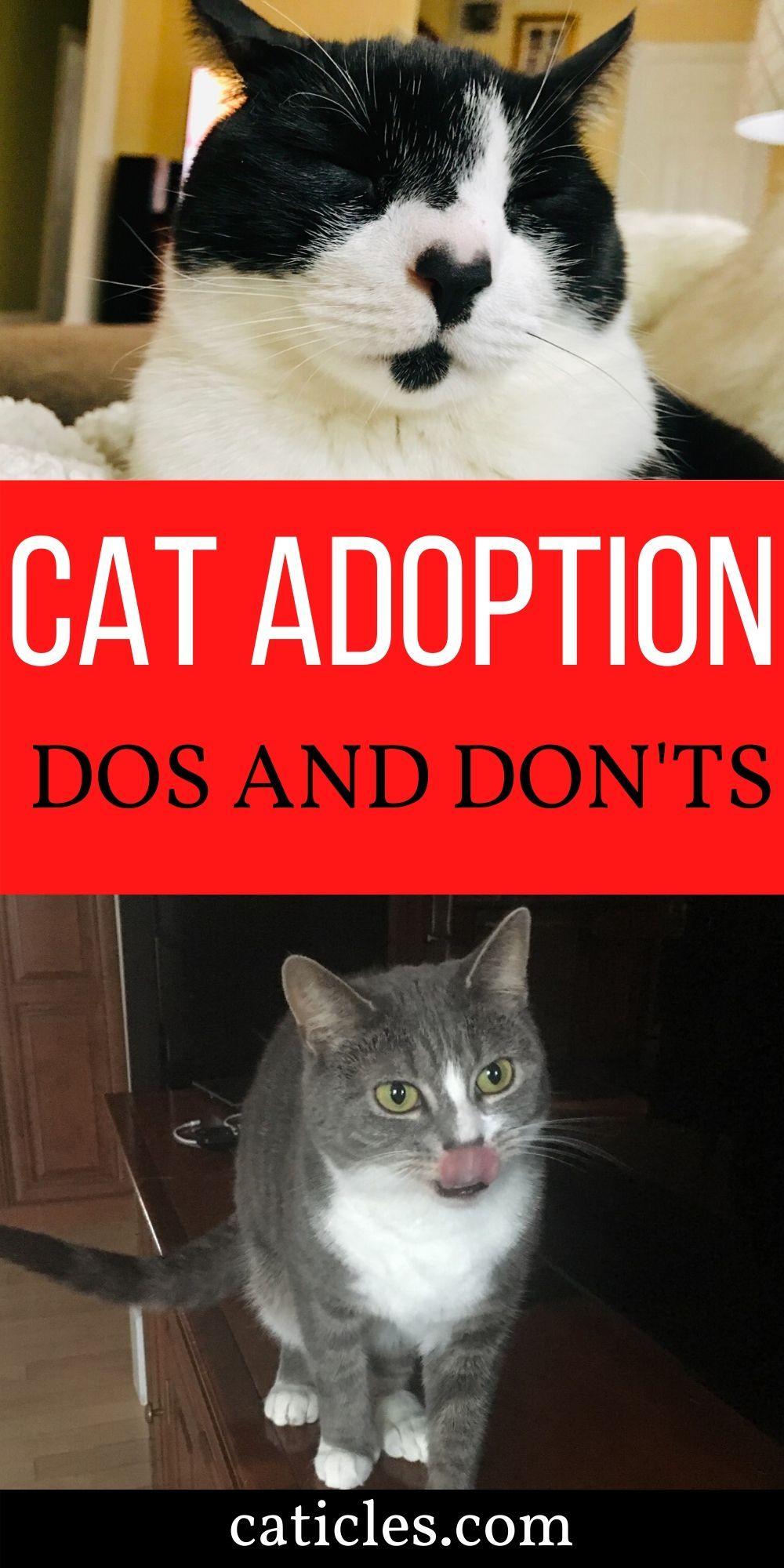 Pin on Adopting a Pet Tips