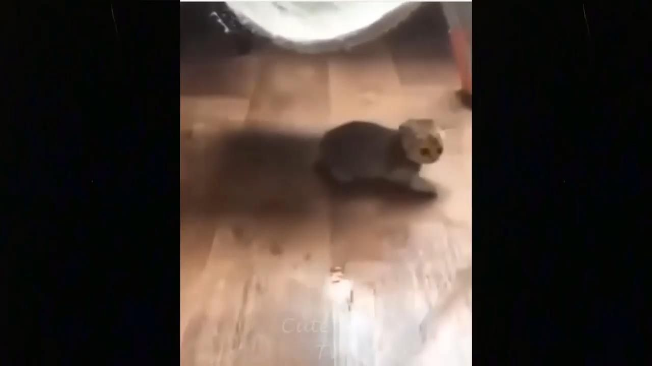 CUTE AND LOVELY ADORABLE KITTENS