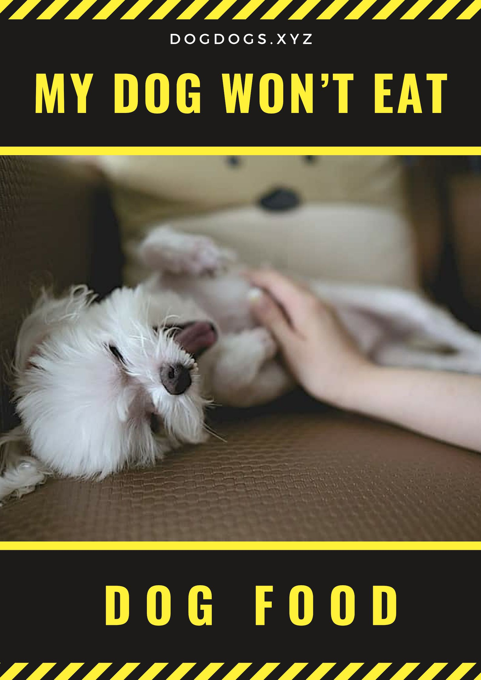 Have You Detected Your Dog Showing Other Outlandish Behaviors As