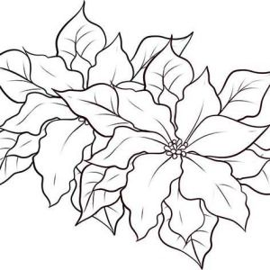 Poinsettia Day Letter P Is For Poinsettia For Poinsettia Day Coloring Page Blooming Poinsettia Coloring Pages Flower Coloring Pages Christmas Coloring Pages