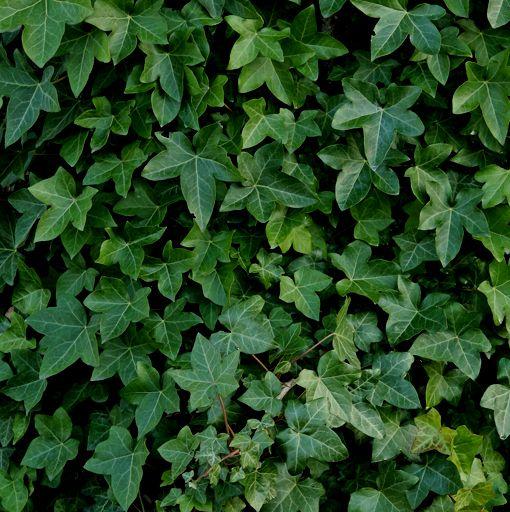 Grönt är skönt Villl du dekorera ditt hem med äkta gröna