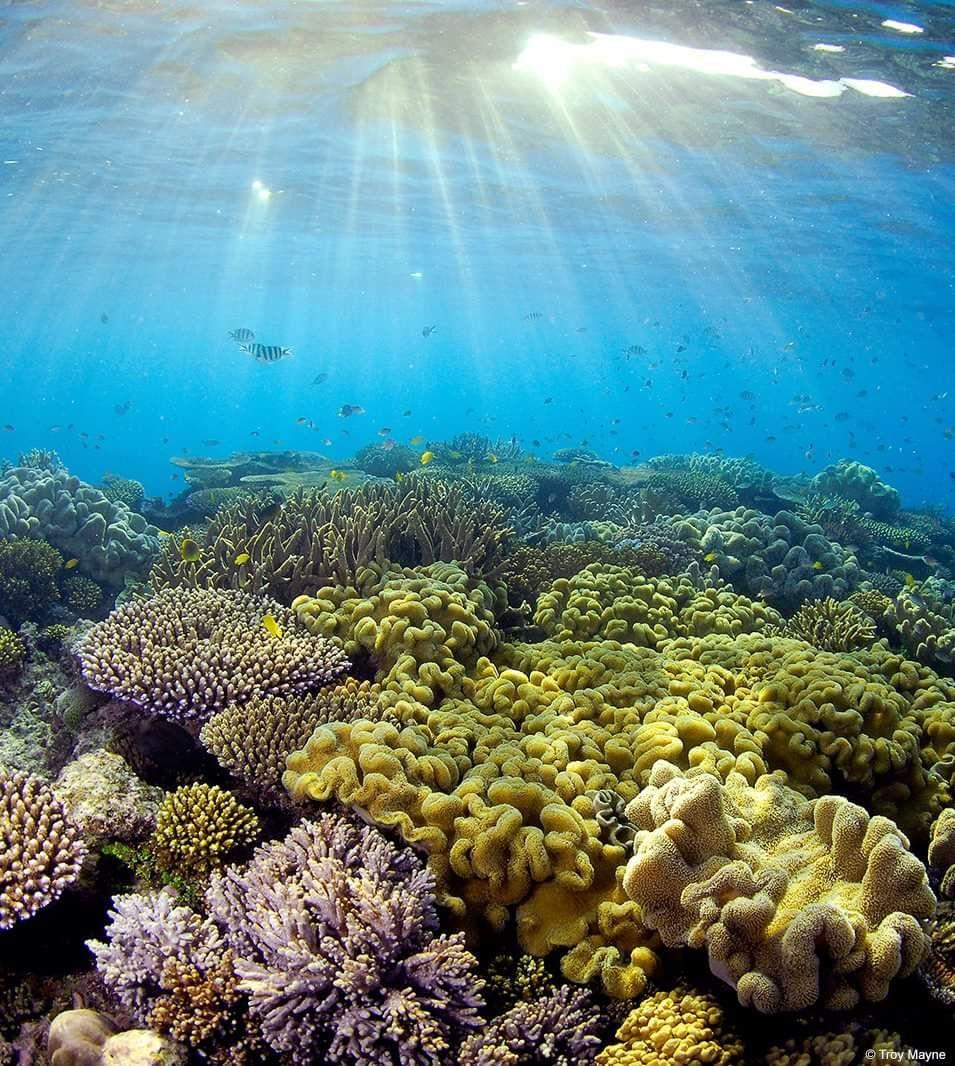 Great Barrier Reef, Wonders