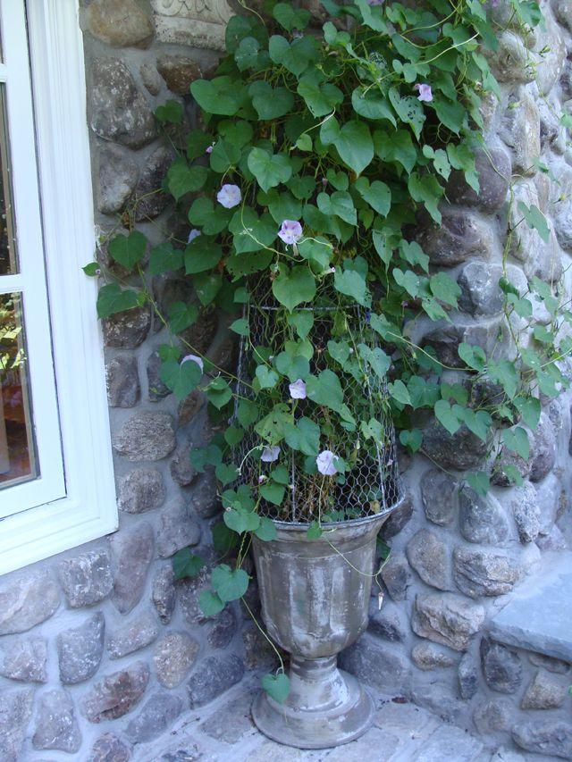 Cjm Inspiring Mom Roberta Rose Part 1 Garden Styles Garden Boxes Morning Glory Vine