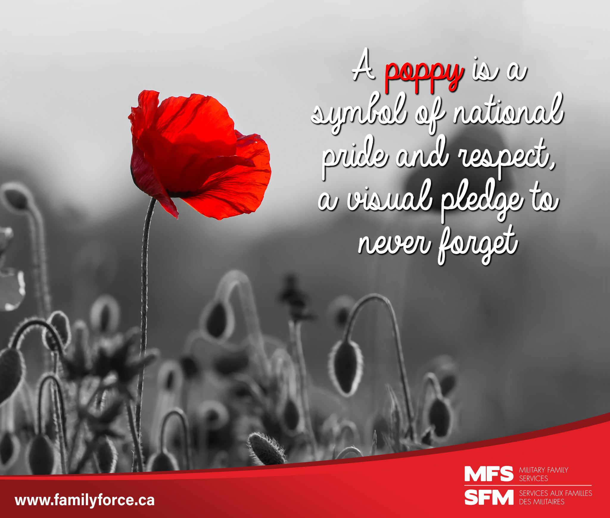 What does a poppy mean to you? To us, it is much more than just a having a pin on a jacket. It is a symbol of national pride and respect, a visual pledge to never forget the Canadian Armed Forces members and #Veterans who are serving and have served our country.