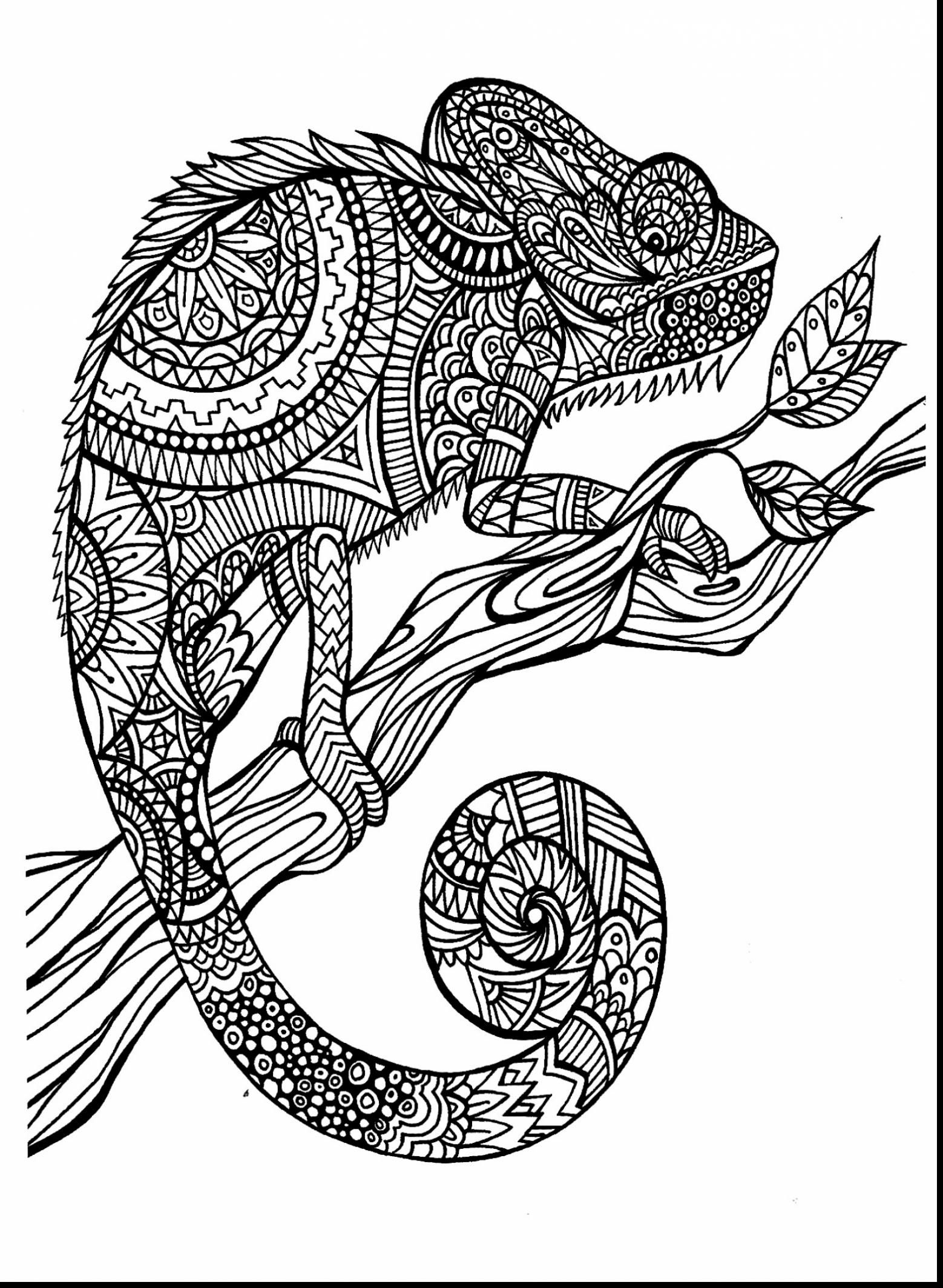 Dessin cameleon coloring sheets adult colouring pages animal coloring pages printable coloring