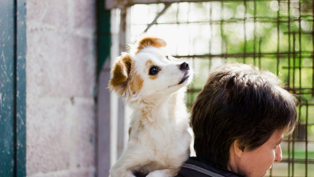 7 Animal Shelters To Volunteer At In Nyc To Make More Than One Fur Babies Day Animal Shelter Puppies Animals