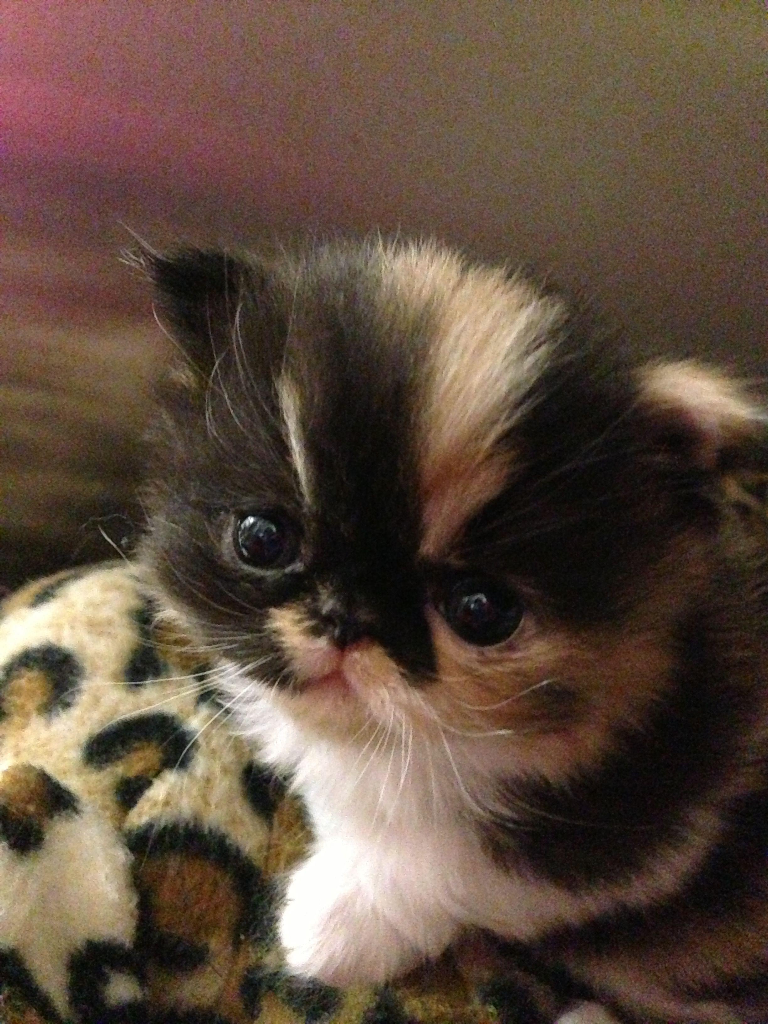 Whys Dids De Monkey Fallz Outta De Tree Cuz He Wuz Dead With Images Kittens Cutest Cute Cats Cute Animals