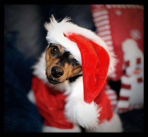 Christmas Photo Album Of Pets Christmas Photo Album Dog