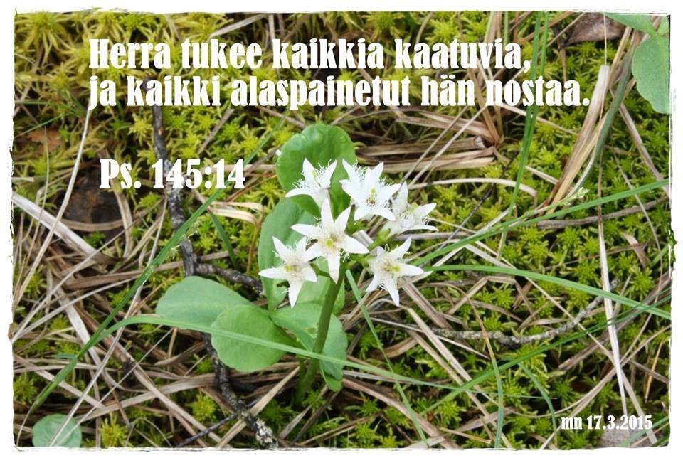 Psalmi 145:14