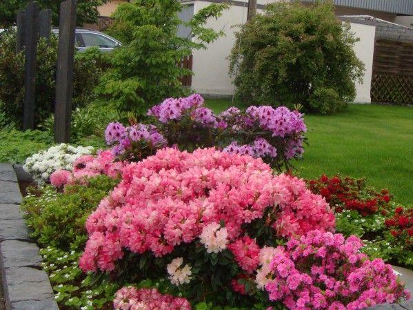 rhododendron garten pinterest sch ne dinge dinge und g rten. Black Bedroom Furniture Sets. Home Design Ideas