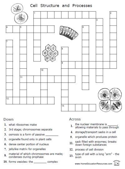 Are You Studying Cells This Year In Science  Don U0026 39 T Miss These Free Printable Worksheets For