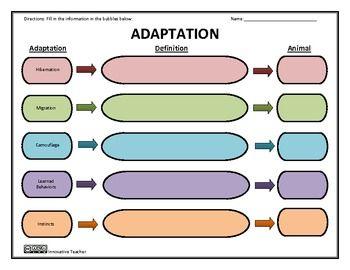 Worksheet Grade 2 Worksheet On Camouflage adaptation graphic organizer hibernation migration camouflage camouflage