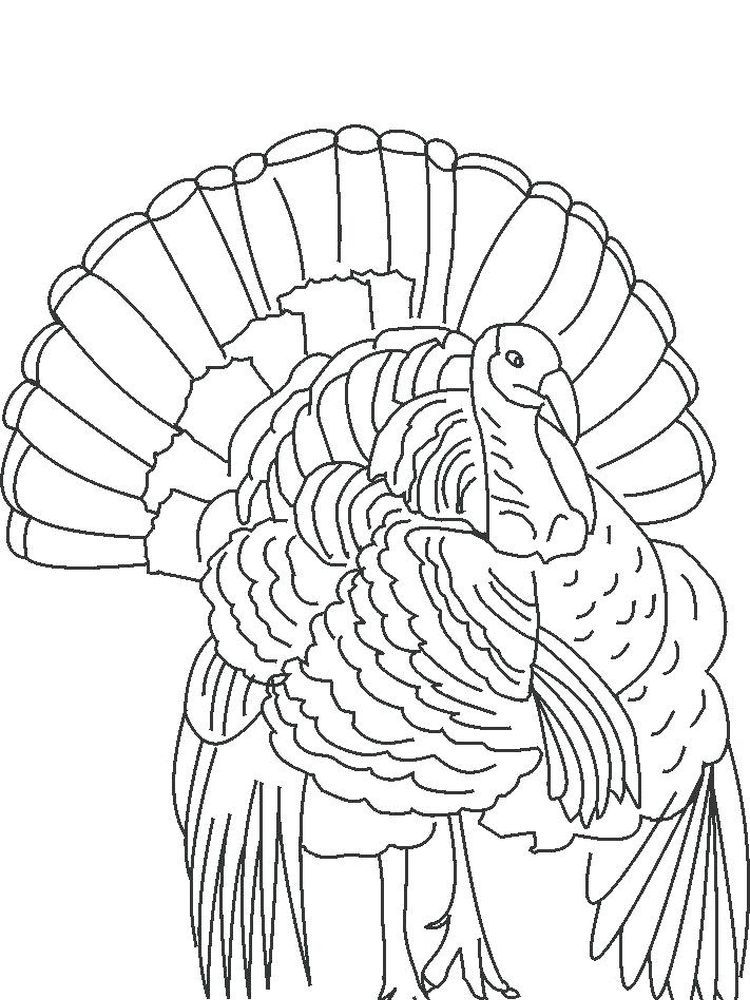 Turkey Coloring Pages For Toddlers Turkey Is One Type Of Large Bird That Is Usually Used As A Dish Turkey Drawing Turkey Coloring Pages Animal Coloring Pages