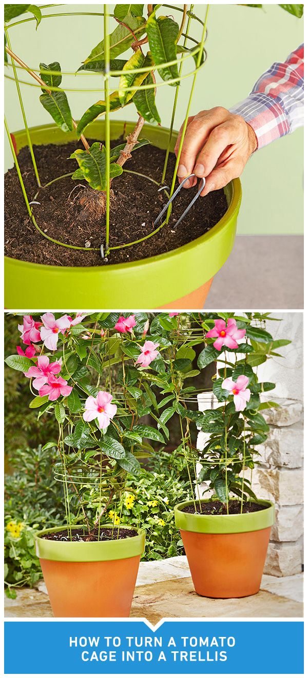 Turn A Tomato Cage Into A Flowerpot Trellis In 5 Easy Steps Then Watch Your Favorite Flower Grow To New Heights Garden Trellis Easy Garden Garden Containers
