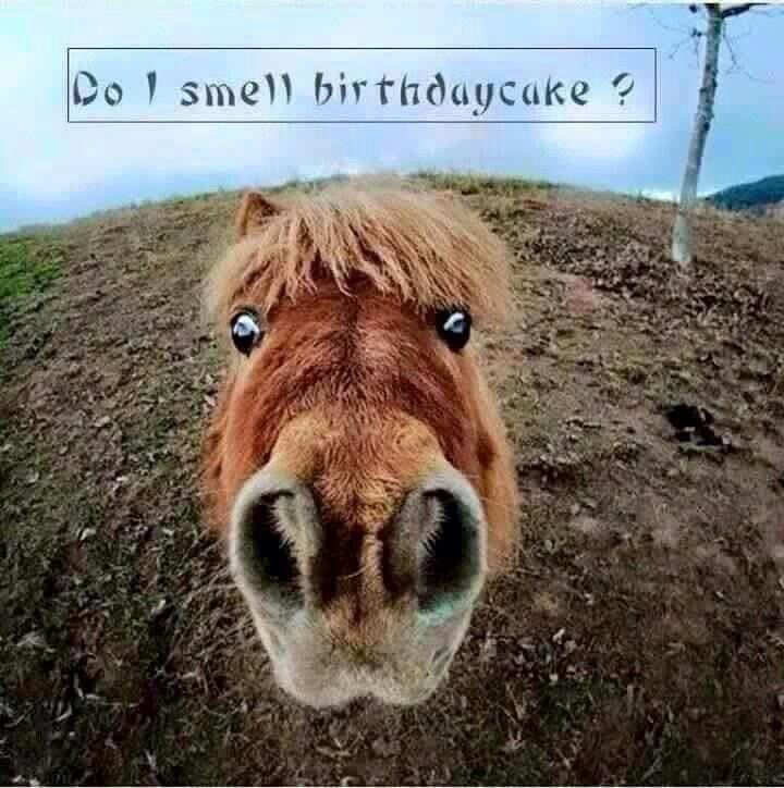 Pin By Anna Saiger On Felicitaties Enz Funny Happy Birthday Wishes Birthday Humor Happy Birthday Horse