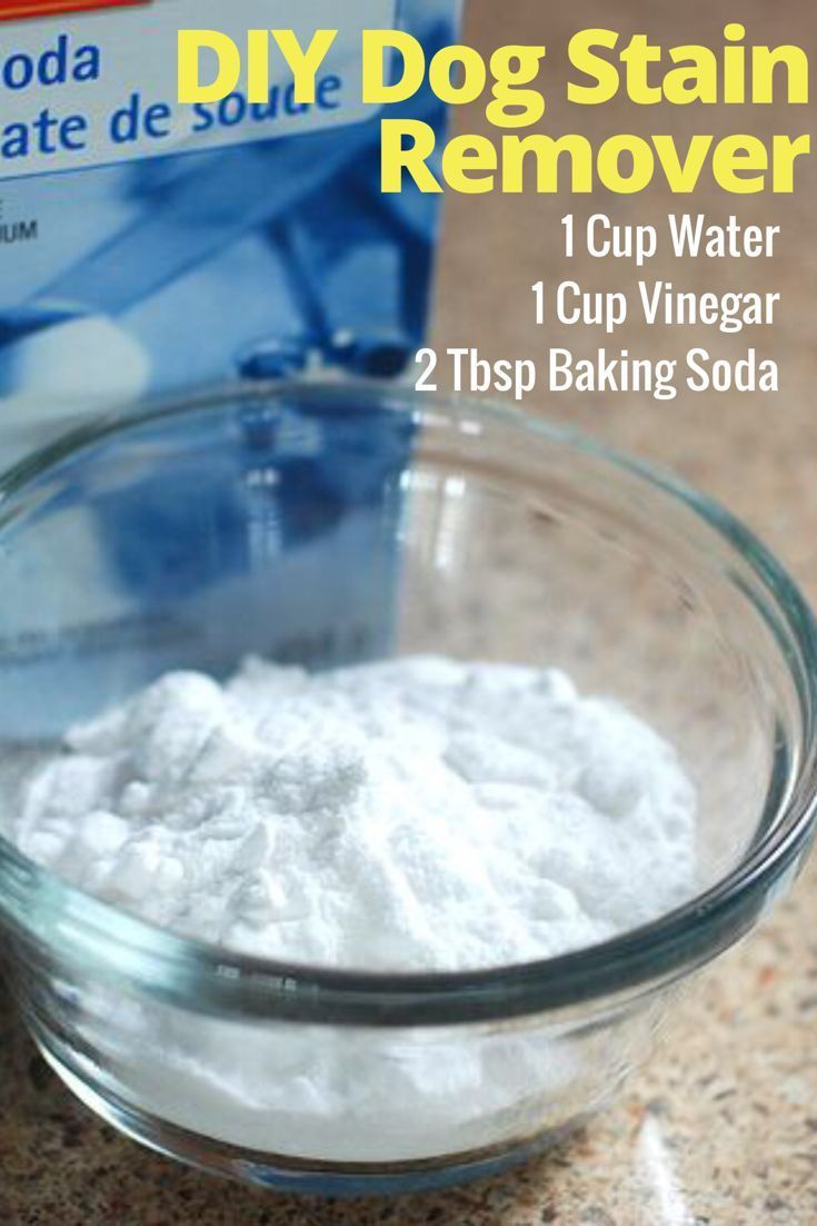 Homemade diy dog odor and stain remover baking soda