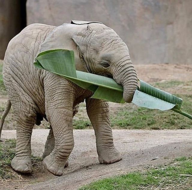 Картинки слон прикольные