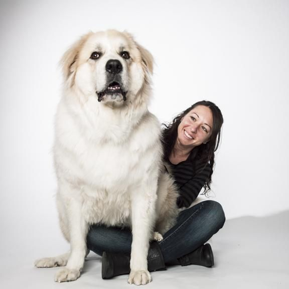 Look Mom I M A Lap Dog Cute Dogs Lap Dogs Pet Insurance For Dogs