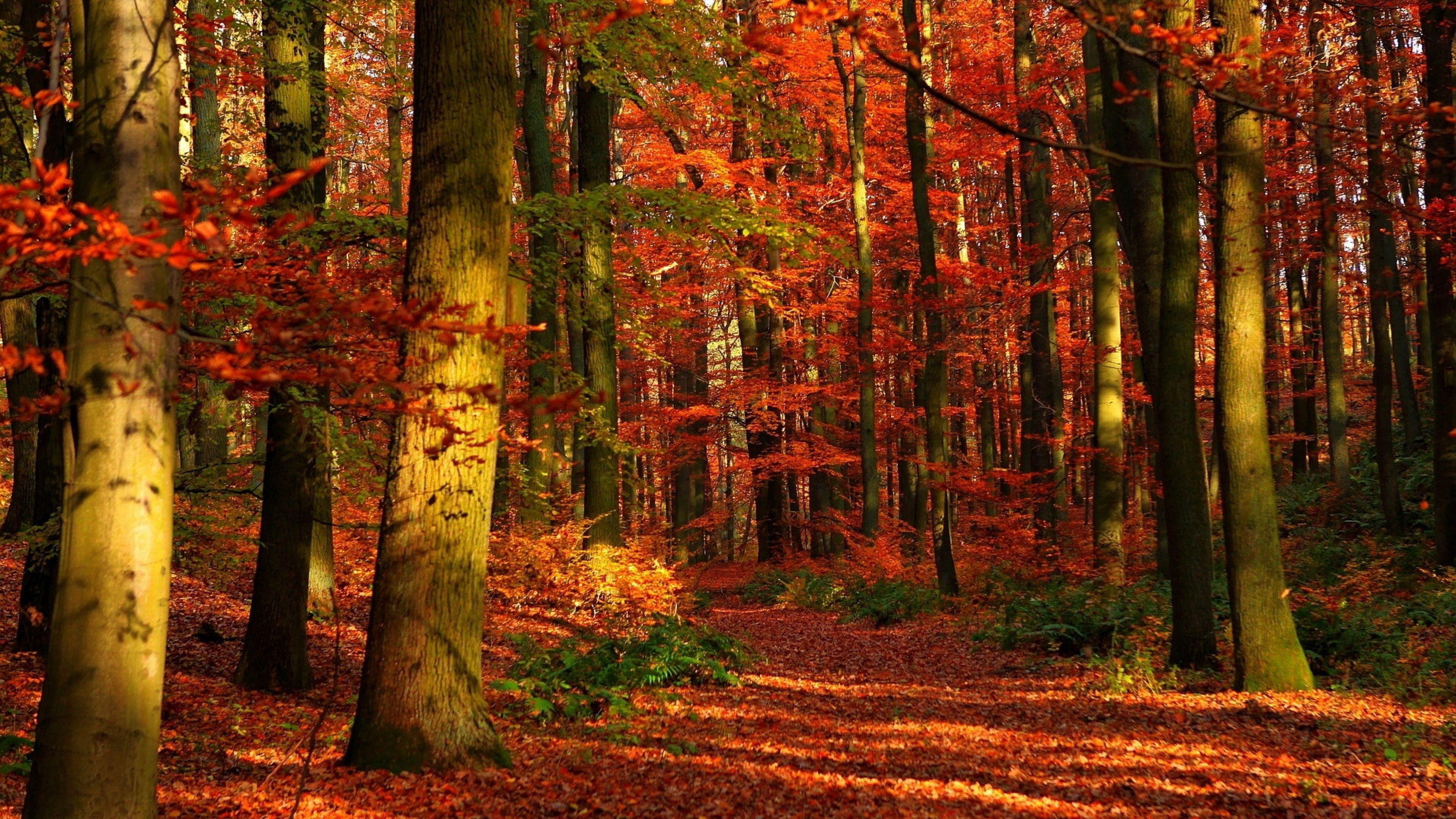 4K Ultra HD Autumn Wallpapers HD, Desktop Backgrounds