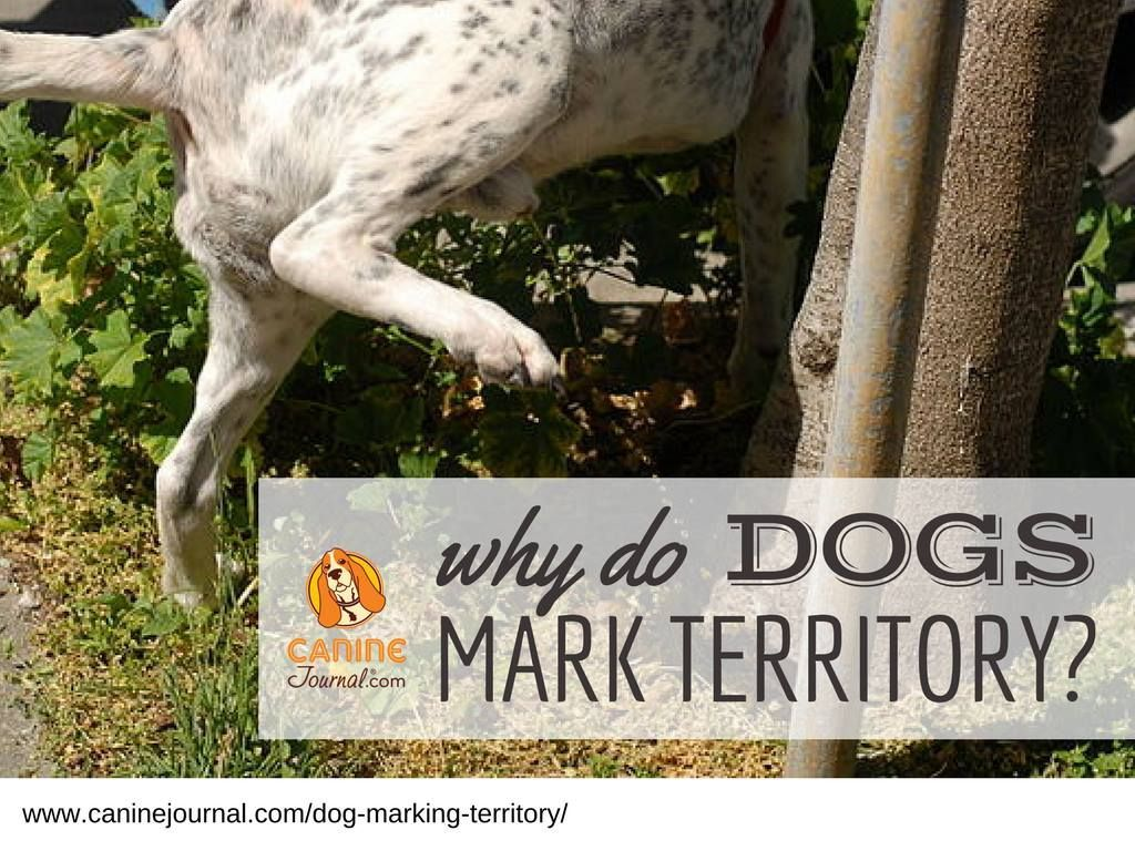 Dog Behavior Why Do Dogs Mark Territory Within The First Few