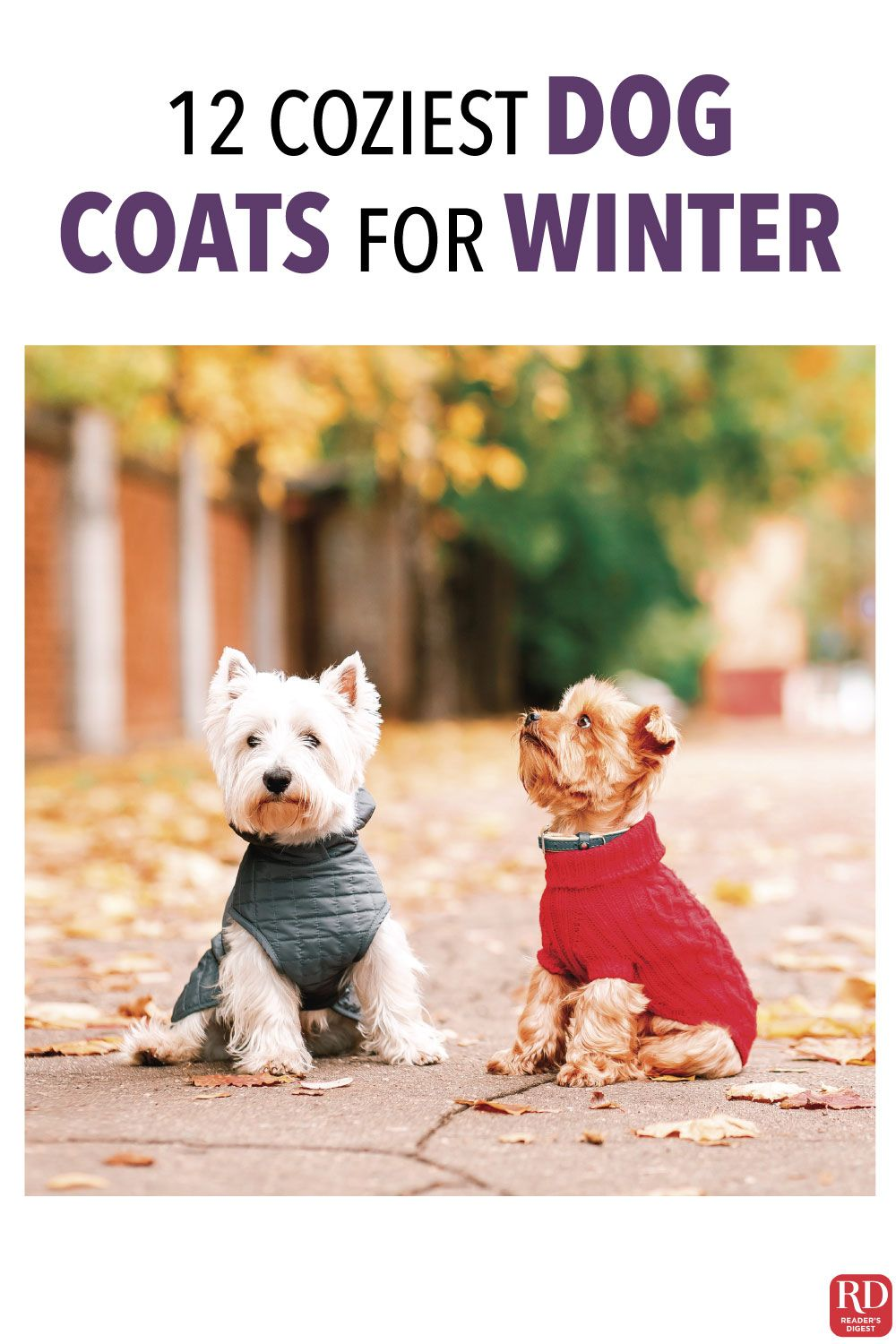 12 Coziest Dog Coats For Winter Your Pup Will Enjoy Having Protection From The Cold Just As Much As You Do On Harsh Winter Dog Winter Coat Cozy Dog Dog Coats