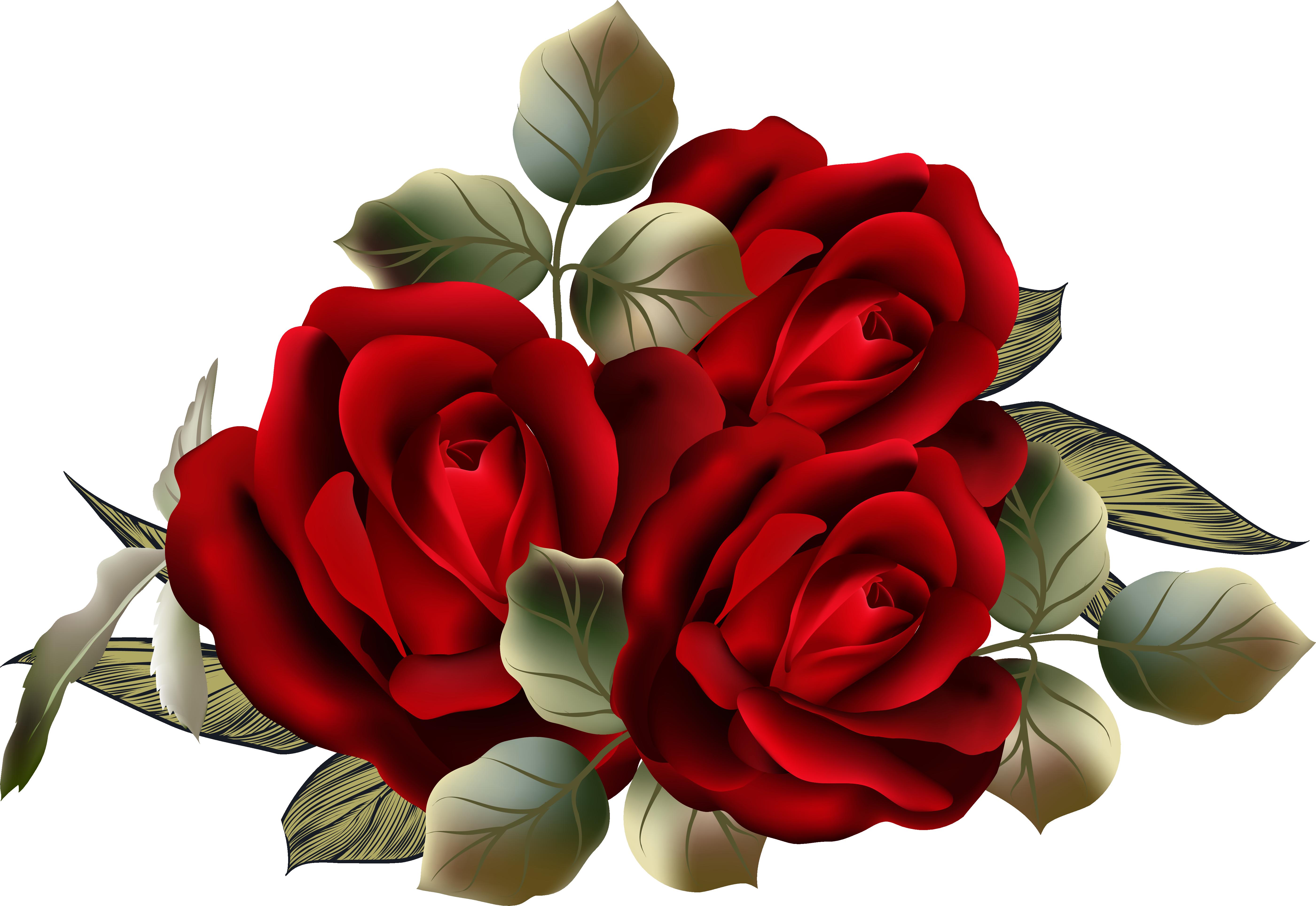 Розы картинки клипарт