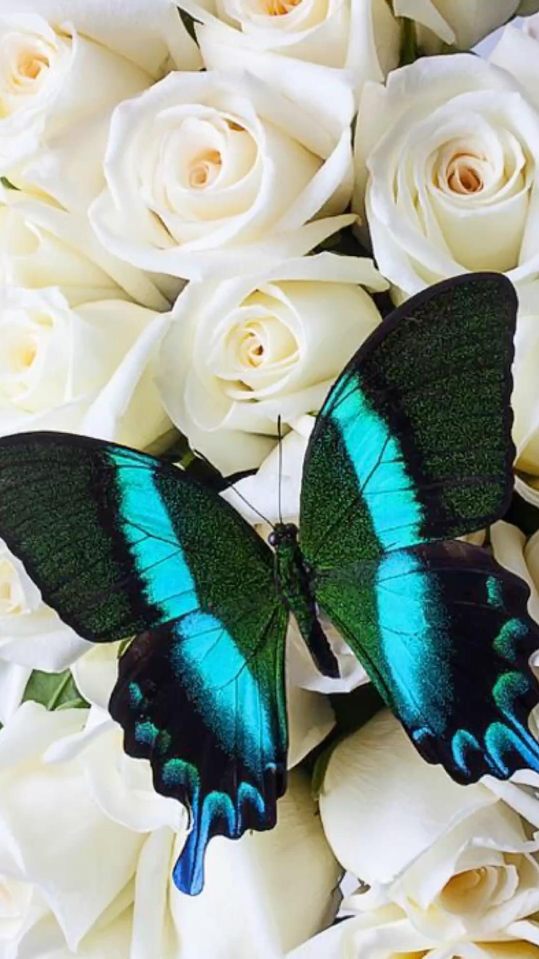 Butterfly woods