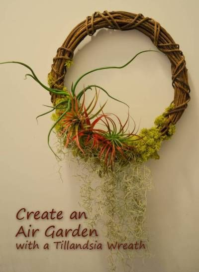 Create an Air Garden With a Tillandsia Wreath Gardens Twists