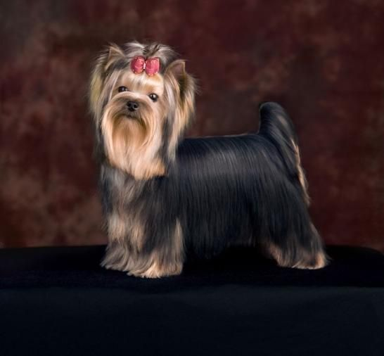 Dog Grooming Services Located In Queen Creek Arizona Our Pet