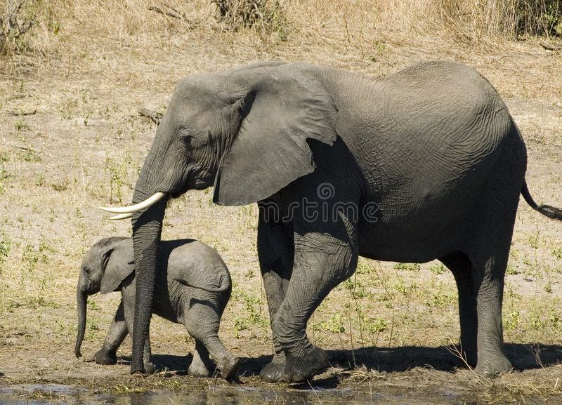 Elephant And Her Baby Sponsored Elephant Baby Ad Travel