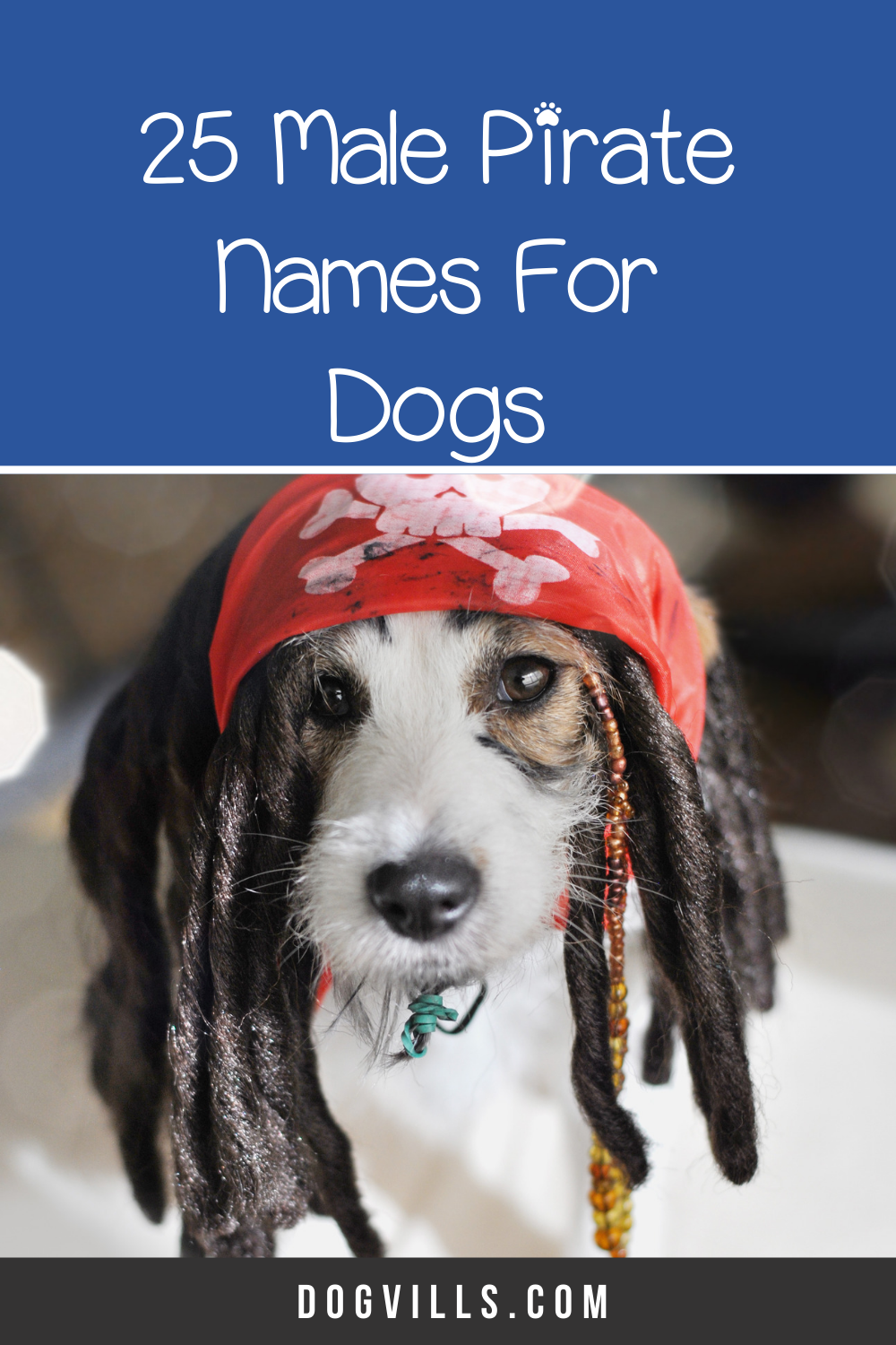 50 Perfect Pirate Dog Names Dogvills In 2020 Dog Names Best