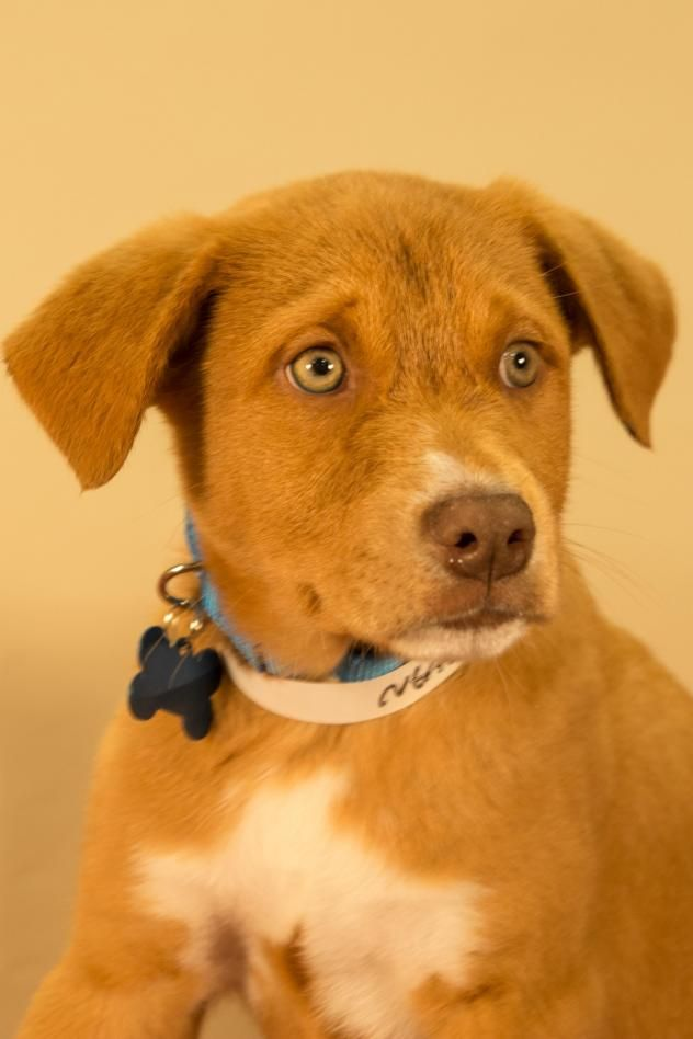 Adopt Nathan On Dog Adoption Shepherd Mix Dog Dogs