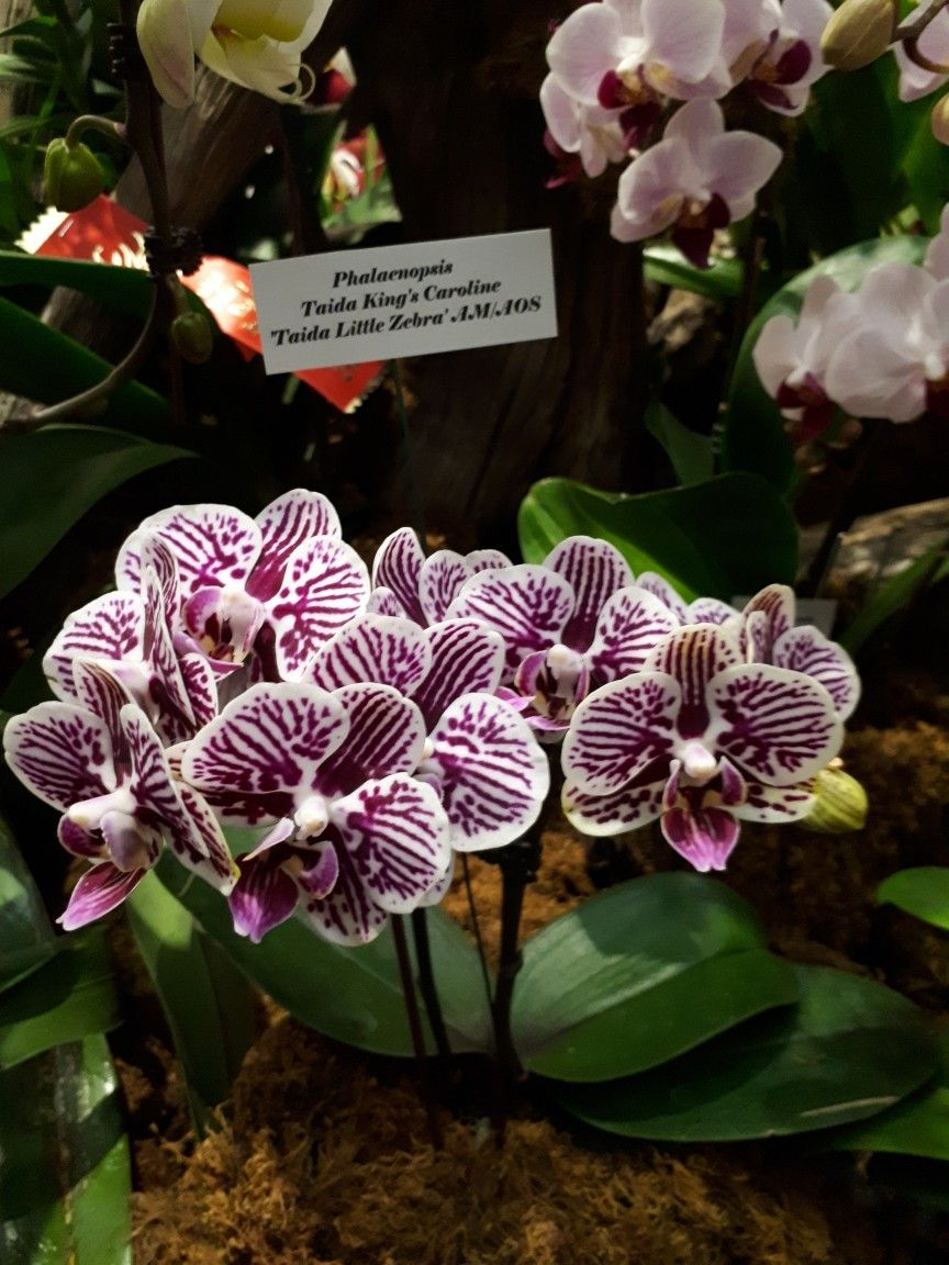 Orchid Show Feb 25 2018 Royal Botanical Gardens Burlington Ontario Canada Orchid Show Orchid Flower Orchids