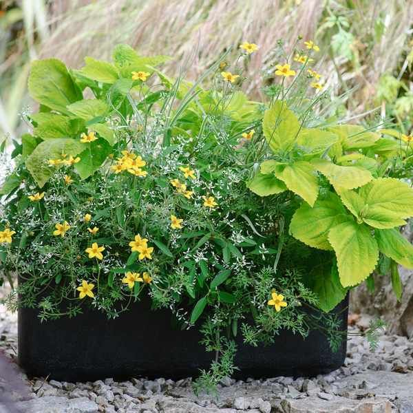 Container plant combinations for a sunny spot -   10 planting Balcony sunny ideas